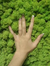 Стабилизированные растения - стабилизированный мох