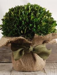 Стабилизированные растения - стабилизированные листья
