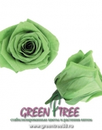 РОЗА БУТОН ЛИТЛ-МИНИ 18 шт / ярко-зеленый/зеленое яблоко