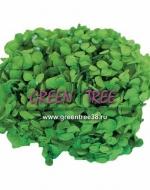 ГОРТЕНЗИЯ в упаковке / зеленая