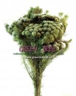 БРУНИЯ  серо-зеленый