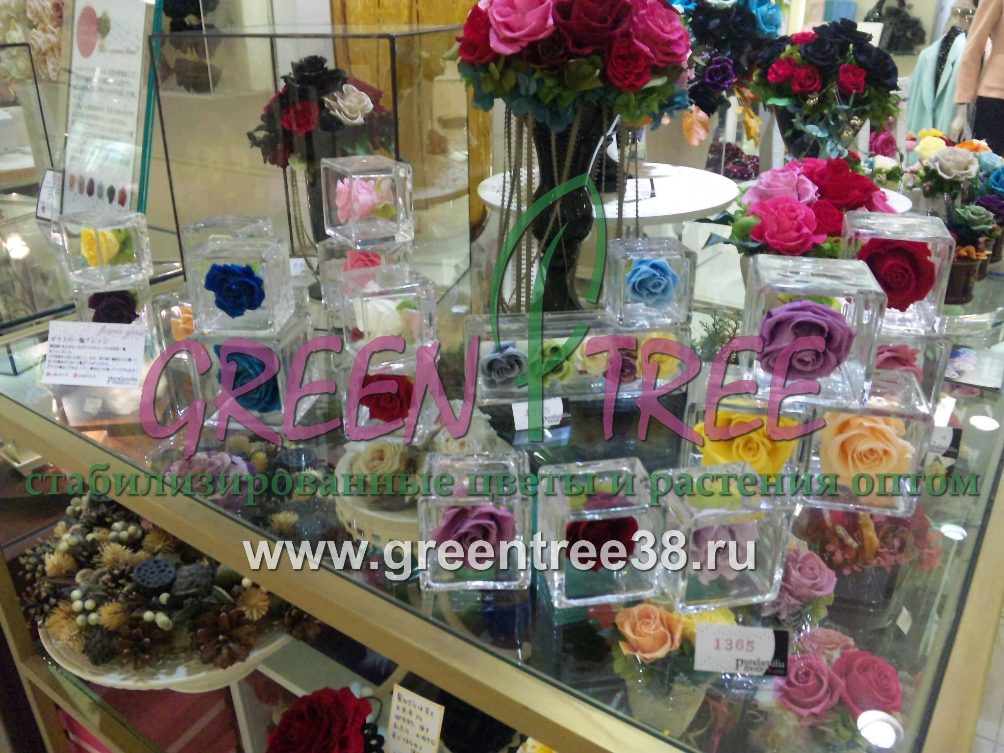 Цветы стабилизированные купить оптом